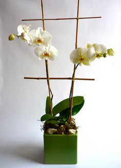 Labellum - White Orchid Plant, modern, contemporary, asian design, designed by Labellum www.labellumflowers.com