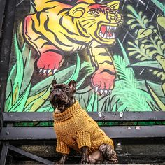 I was born to stand out.  Be fierce. Be brave. And be confident. Find my gorgeous sweater - use Chain - use 💛🖤 . French Bulldog Clothes, Love Pet, Dog Accessories, Confident, Brave, Sweater, Chain, Pets, Painting