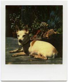 New Impossible Project Color Shade: Bug by heather, via Flickr