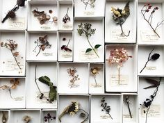 Style And Design Your Individual Enterprise Playing Cards In The Home Dry Your Summer Flowers From The Garden Or Foraged Finds In The Dry Summer Sun Of A Window And Put In Individual Boxes To Hang Together As A Pretty Collection Of Floral Art Art Floral, Deco Floral, Flower Boxes, Flower Cards, Material Didático, Nature Journal, Handmade Home, Amazing Flowers, Botanical Art