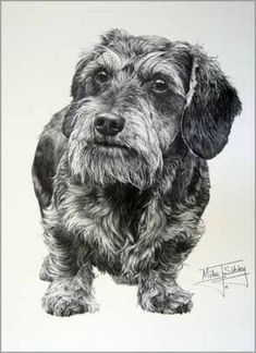 Antique Photo~Cute Wire Haired Dachshund Puppy Dog Portrait~NEW Large Note Cards