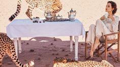 Анжелина Джоли позавтракала с гепардами в Намибии - Вокруг Света