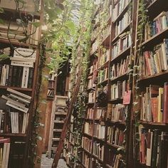 Incredible home library catalog system you'll loveYou can find Dream library and more on our website.Incredible home library catalog system you'll love Deco Nature, Dream Library, Beautiful Library, Home Libraries, Book Aesthetic, Travel Aesthetic, Traditional Decor, Book Nooks, Reading Nooks