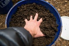 8 ways to make healthy organic soil for your garden – NaturalNews.com ~ Many beginning gardeners may just assume that dirt is dirt, and no matter what you put into it, as long as you water it some, your crops will grow. The fact is, soil is different throughout the world; in the United States alone, there are many variations of soil – pH levels, acidity, nutrients, the presence of heavy metals, sandy soil, clay, and so on. [...] 03/28/17