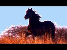 Klaus Ferdinand Hempfling with beautiful black PRE stallion Habanero Horse Videos, Black Stallion, Ferdinand, Beautiful Horses, Black Beauty, Youtube, Animals, Psychology, Pretty Horses