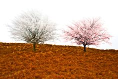 Marriage by Beniamin Sabo on Two Trees, Different Colors, Marriage, Country Roads, Colours, Fine Art, Valentines Day Weddings, Mariage, Visual Arts