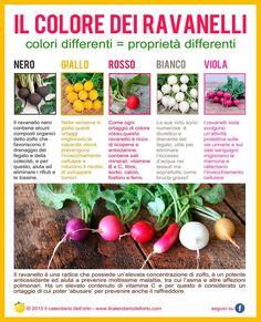 Il Colore dei Ravanelli: colori differenti = proprietà differenti.