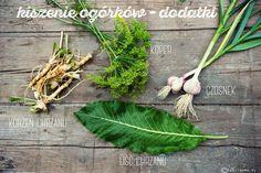 jak zrobić ogórki #małosolne - dodatki - chrzan, koper, czosnek #sezonogórkowy