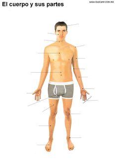 155 Mejores Imágenes De Anatomía Humana Human Anatomy Human