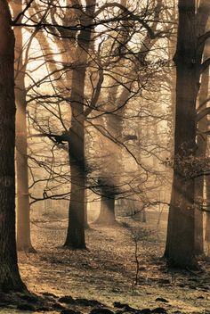 I love the woods this is so peaceful