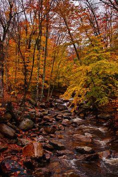 Creek, New England. Eye Scene: Photographer, Ryuichi Oshimoto