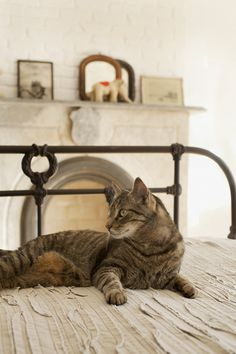 Bedroom fireplace with a pretty kitty
