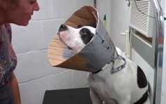 DIY Cardboard Dog Cone of Shame - so much better than paying over $30 for one!