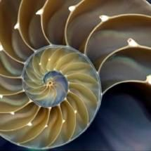 Fractal sea shell. Conch. Spiral.