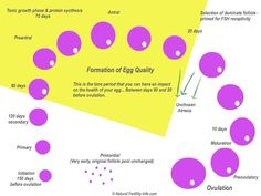 Cycle of an egg