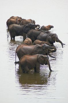 Bath time! (Elephants)