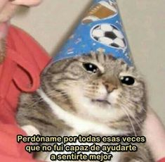 Cute Funny Animals, Funny Animal Pictures, Funny Cute, Cool Cats, I Love Cats, Cat Memes, Funny Memes, Sad Cat Meme, Gatos Cool