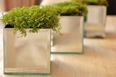 7.) Square mirrors become artsy planters with a hot glue gun.