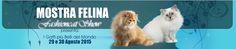 #Expo felina delle #Dolomiti. In mostra i 600 #gatti più belli del mondo. Al via la terza edizione della Expo Felina delle Dolomiti. Dopo il grande successo delle prime due edizioni (2013 e 2014) i felini più straordinari tornano al PalaFiere di Longarone (BL) sabato 29 e domenica 30 agosto 2015. http://www.ilsitodelledonne.it/?p=17995