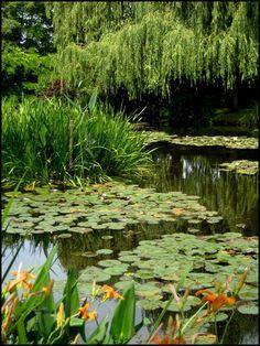 Claude Monet, Water Garden, Fruit Garden, Monet Water Lilies, Nature Hd, Sad Wallpaper, Lily Pond, Beautiful Forest, Delphinium