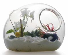 terrarium. i like it when the container is turned on its side