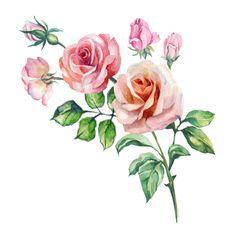 Botanical Flowers, Botanical Prints, Floral Flowers, Flower Art Images, Flower Pictures, Watercolor Print, Watercolor Flowers, Rose Sketch, Colorful Roses