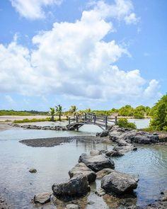 #Madinina vue par @tipiment11: Lets go to la Savane des Pétrifications aux Salines    Une de mes randonnée préférées en Martinique  .  .  .  #martinique #madinina #travel #traveling #explorers #adventure #randonnee #tourism #picoftheday #photodujour #caribbean #antilles #ig_caribbean #matinik_pictures #WeLike ! A voir sur Instagram : http://ift.tt/25qlV7L