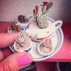 Não quer entrar e tomar uma xícara de café?  #miniatura no meu jardim! #láemcasa #homesweethome #succulents #suculentas #cactus #cupoftea #minigarden #gardening #garden #sitecasaaberta #decorarmaispormenos