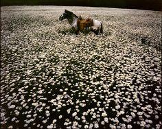 rangeedepauvre: mayanhandballcourt: Photographer Linda McCartney Her appaloosa :'(