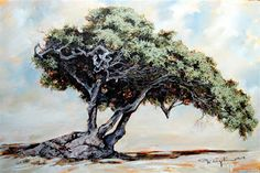 """Terry Kobus - """"Lone Sentinal"""" Oil on Canvas 900 x Tree Paintings, Group Art, Art Boards, Oil On Canvas, Landscape, Gallery, Originals, Artwork, Fine Art"""