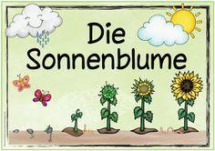 "Ideenreise: Themenplakat ""Die Sonnenblume"""
