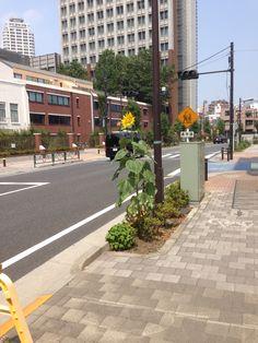 Tall flower in Ikebukuro, seemingly waiting for something.