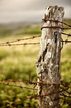 I'm not sure there is anything I enjoy more than old fence posts with rusty barbed wire...