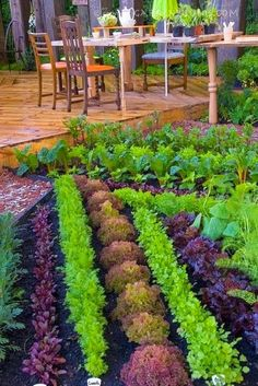 Beautiful Vegetable and Herb Garden