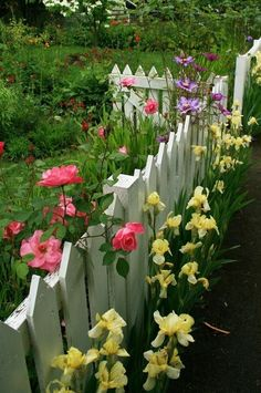 Pink roses and other flowers along a white picket fence