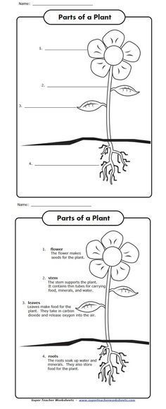 Celebrate Earth Day with this worksheets! Label the parts of the plant shown in the picture and tell what each part does to keep the plant alive.