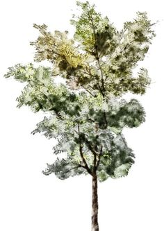 tree sketches colors - Google Search