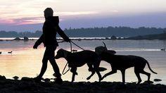 Sanotaan, että koira on ihmisen paras ystävä. Väkilukuun suhteutettuna Suomessa on maailman eniten koiria.  Copyright: Lehtikuva. Kuva: Jussi Nukari.