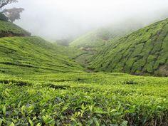 Kolukkumalai Tea Estate Kerala