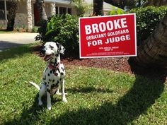 """Meet Keekoh Caza, President of """"Dogs for Brooke Deratany Goldfarb for Judge"""""""