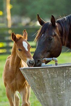 un piti poulain et sa maman All The Pretty Horses, Beautiful Horses, Animals Beautiful, Beautiful Beach, Farm Animals, Animals And Pets, Cute Animals, Nature Animals, Baby Horses
