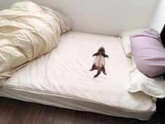 "There is a person inside! The ferret that sleeps in the bed in ""large letters"" is too cute . Ferrets Care, Funny Ferrets, Animals And Pets, Baby Animals, Funny Animals, Long Cat, Pet Ferret, Cute Little Animals, Exotic Pets"