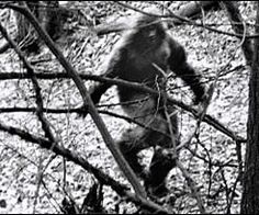 The 10 Most Convincing #Bigfoot Photos Ever Captured