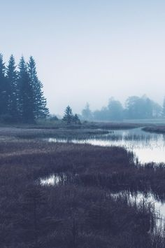 Nature + Landscape Photography Inspiration · Beautiful Moody Outdoors · Forest · Woods