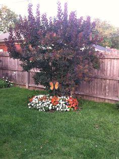 Our smoke tree