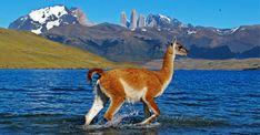 patagonia - Google Search