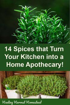 Did you know you have medicinal herbs in lieu of spices in your kitchen cupboard. - Did you know you have medicinal herbs in lieu of spices in your kitchen cupboard. Did you know you have medicinal herbs in lieu of spices in your ki. Healing Herbs, Medicinal Plants, Natural Healing, Natural Herbs, Natural Medicine, Herbal Medicine, Herbs For Health, Health Tips, Health Benefits
