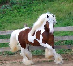 Horse with glam mane. So fabulous.
