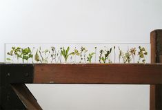 Each herb or wildflower is set in acrylic at 1cm intervals creating a poetic garden that is also a 30cm ruler.