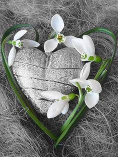 Snowdrop heart ✨